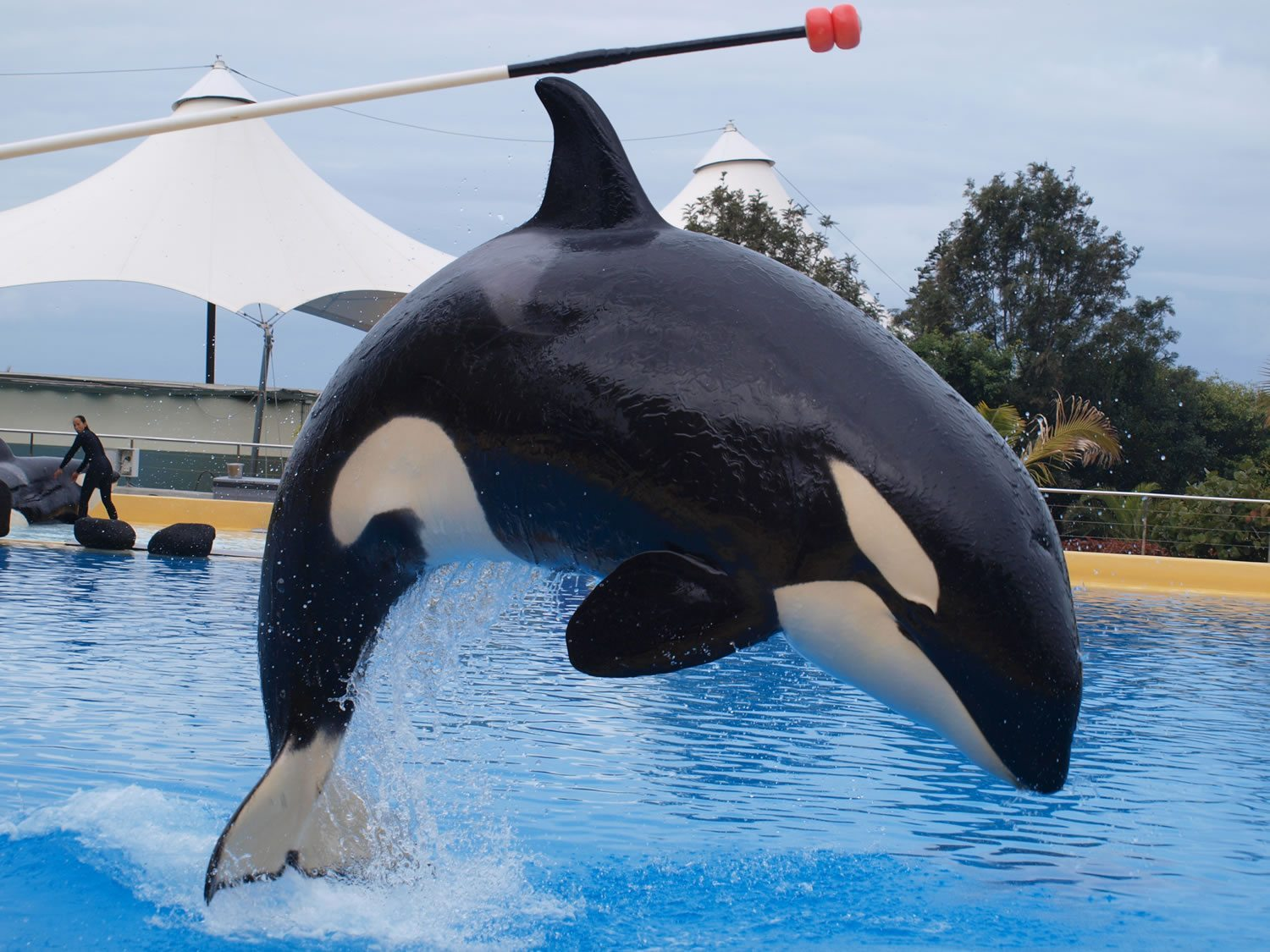 Fate of orcas in captivity - Whale & Dolphin Conservation ...