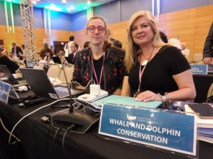 We won for whales at the International Whaling Commission