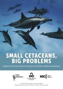 Small cetacean report