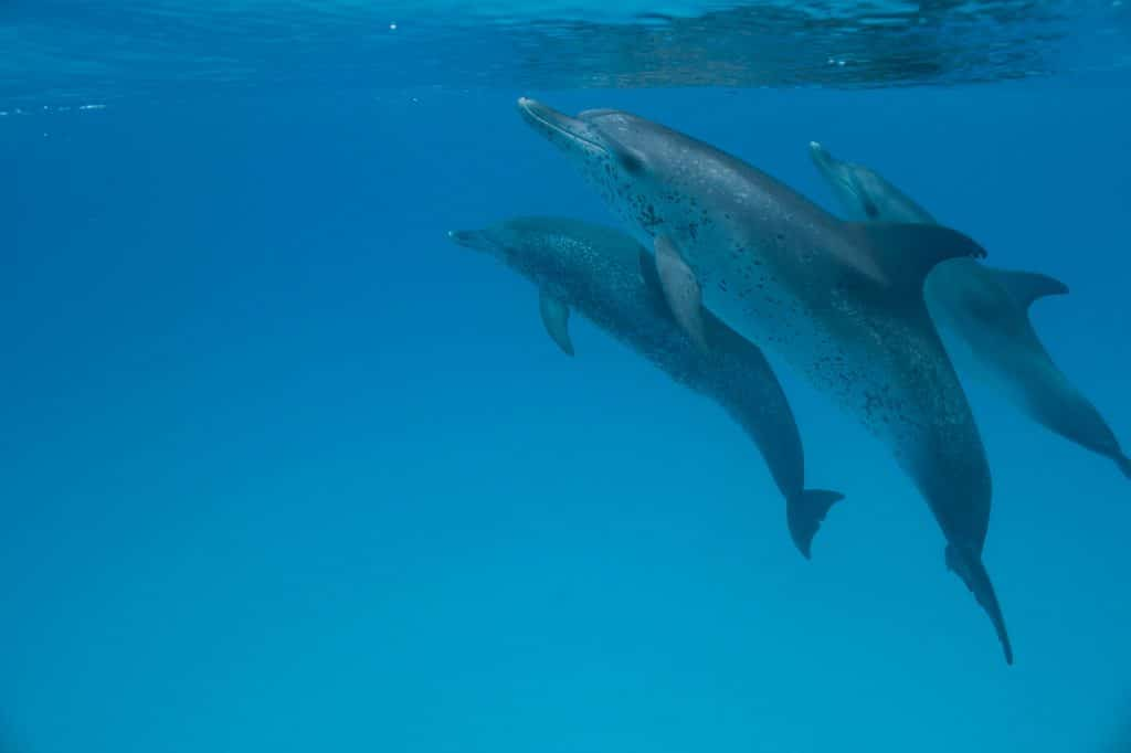 What is a group of dolphins called?