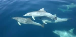Conservation in action – working on an international stage to protect whales and dolphins