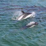 peales-dolphin-sg-hugh-venables