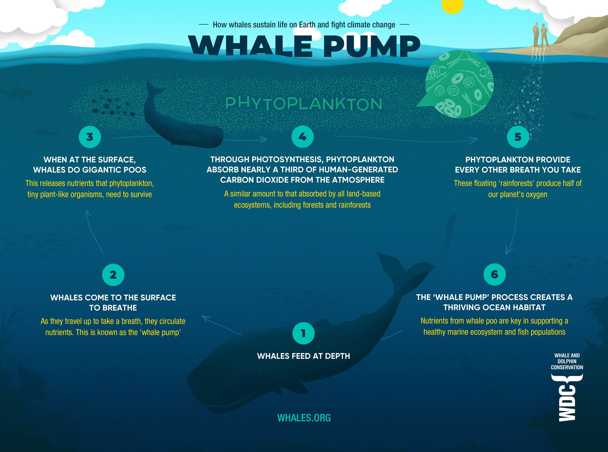 Whale pump infographic