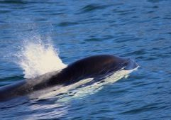 orca-blow-megan-hockin-bennett2